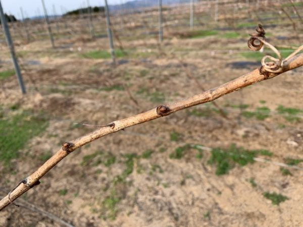 農家がシルバー人材センターに初めて依頼する話