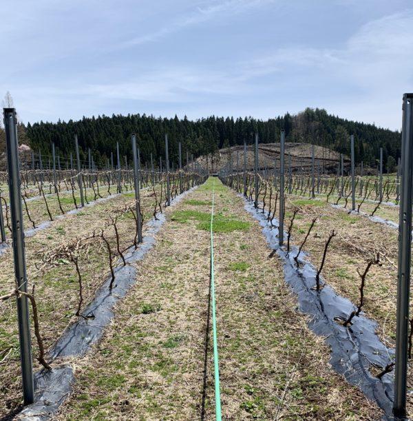 ブドウ栽培するのに必要な3種の神器(機械)