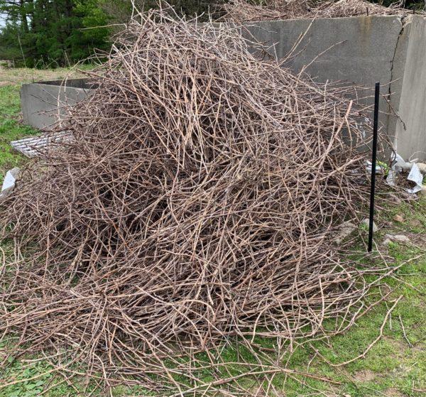 ブドウ剪定枝回収