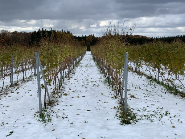 畑に雪が…