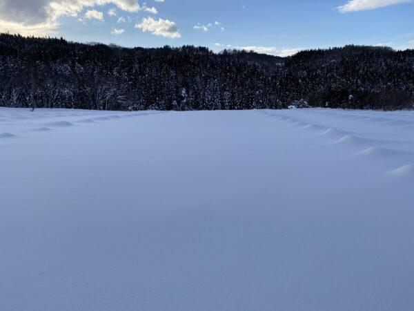 大雪によるブドウ畑への影響